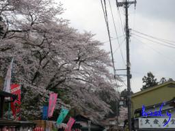 Yoshino02