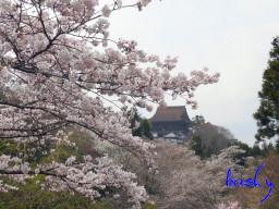 Yoshino03