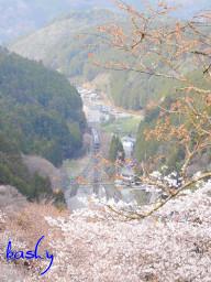 Yoshino05