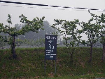 Tsukiura01